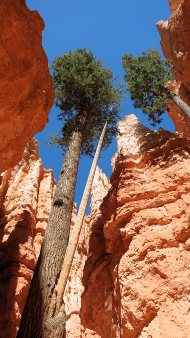 The trees and hoodoos stand with one another